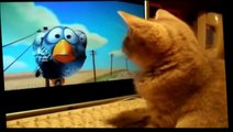 Funny Cats - Funny Animals Videos - Funny Dogs - Funny Animals Compilation 2015 - Funny Vines Cats