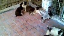 cuccioli di Lagotto Romagnolo nati il 24/04/2011