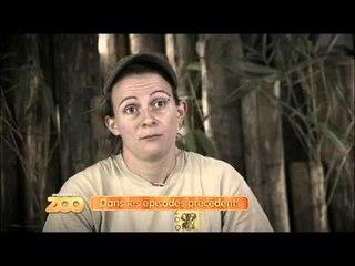 Une saison au zoo - Episode 35 (Saison 2)