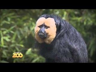 Une saison au zoo - Episode 24 (Saison 2)