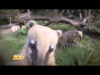 Une saison au zoo - Episode 15 (Saison 3)