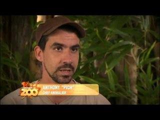 Une saison au zoo - Episode 40 (Saison 2)