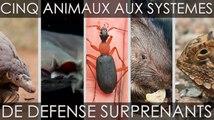 Cinq animaux aux systèmes de défense surprenants