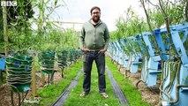 Cet artiste donne des formes de chaises à des arbres : magique!