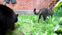Cute Cats Enjoying the Garden - Vlog of Randomness #30