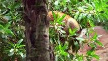 Lemures, orangutanes y más fauna salvaje