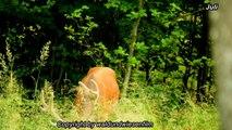 Rotwild und Rehwild im Sommer