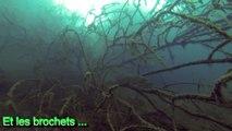 Gravière du Fort : gros brochets, perches, belle visibilité (GoPro)