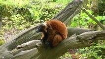Apenheul veel jonge aapjes 2012