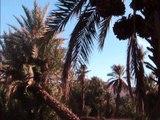 zagora south of morocco