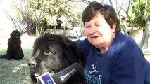 Pension canine Aix en Provence - Pension pour chien aix en provence