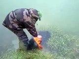 carpe koï remise à l'eau.