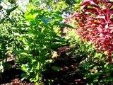 La Polyculture - Pour un jardin vraiment écologique