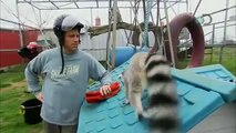 Dirty Jobs - Lemur Attacks Mike Rowe | Exotic Nanny