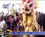WULU BEBEK @ Singa Dangdut KAULA MUDA Prapag Losari Brebes Clip Anoy Vision