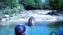 """C'est ce qu""""on appelle un gros pet d'hippopotame"""