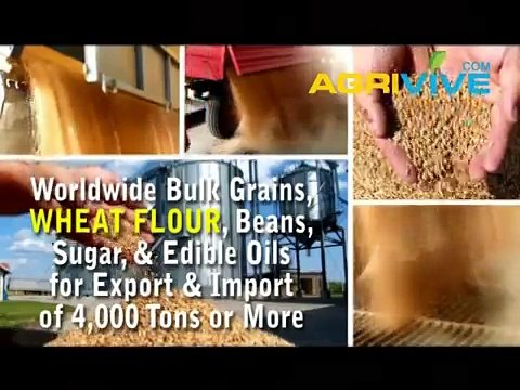 Bulk Wheat Flour Trade, Wheat Flour Trade, Wheat Flour Trade, Wheat Flour Trade, Wheat Flour Trade, Wheat Flour Trade, W