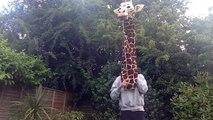 Une girafe qui chante du Marvin Gaye! La classe