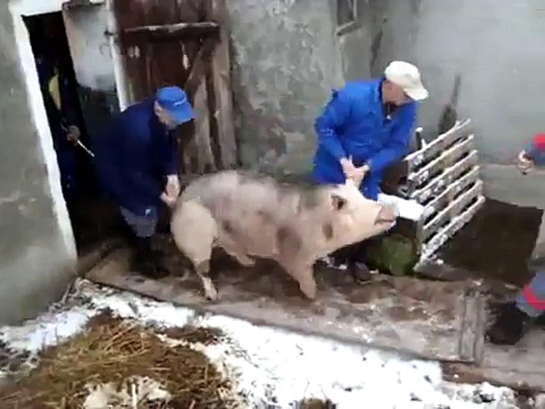 Metzgerin hausschlachtung PIGPLAY SCHLACHTUNG