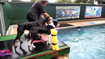 Doberman Ruffi, Border Collie Puppy Roar & Border Collie Feature jump off dock - slow mo