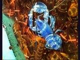 Fukushima Day 1265 ☢ Pacific Fish Boom + Crab, Lobster Radiation Mutations + West Coast Clam Testing