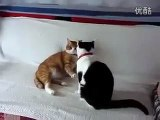 funny cats,funny animals,funny video,cute kittens,kittens,cats,funny cat videos
