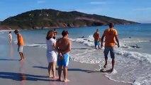 Prisonniers du sable, des dauphins n'arrivent pas à retourner dans l'eau.