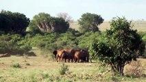 Elephants Helping Elephants