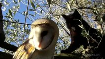 Friendship Cat & Owl - Unlikely Friendship Between A Cat And An Owl(Watch Now)