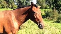 Doen paarden aan judo? / Horses wrestling and playing