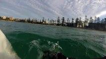 Un grand requin blanc tourne autour d'un surfeur