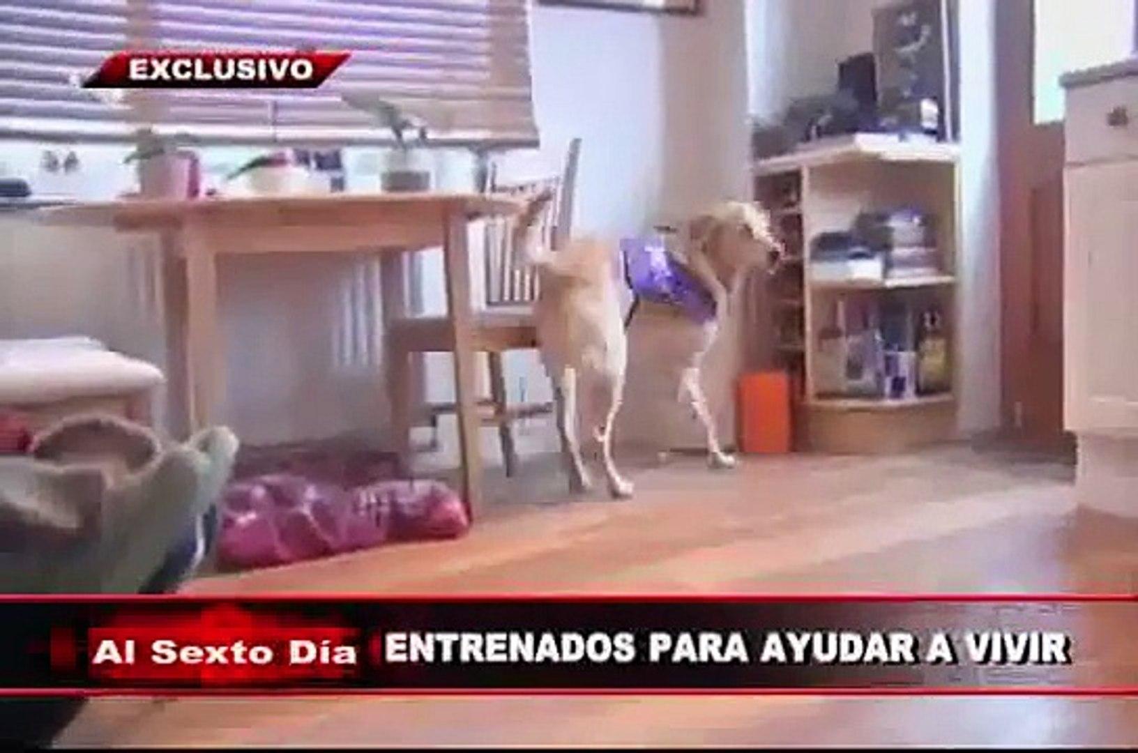 Entrenados para ayudar a vivir: los sorprendentes perros de asistencia