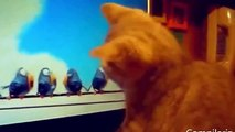 funny cat fails compilation funny cat fails try not to laugh or grin funny cat videos 2015