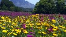 Crete the island inside you | Crete Daydreaming