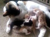 5 cute newborn kittens fighting for milk! So funny!