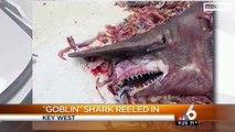 Rare Alien-Looking 'Goblin Shark' Found Off Florida Coast