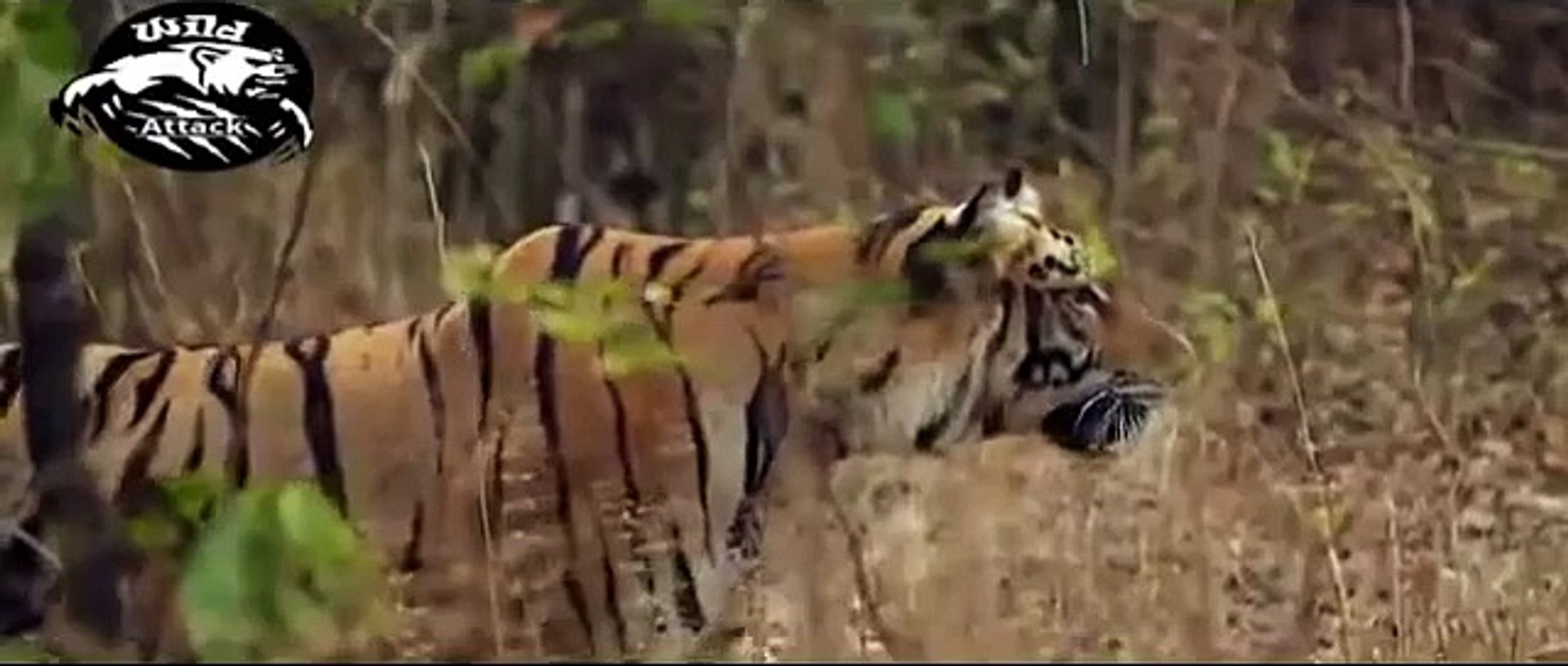 National Geographic Documentary Wild Animals attack National Geographic Animals ✔ ► P.40