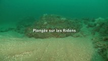 Plongée sur les Ridens au sein du Parc naturel marin des estuaires picards et de la mer d'Opale