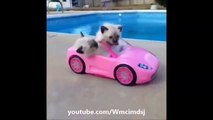 funny cat vines for kids funny cute cats compilation funny cat vines for kids funny scared cat vine