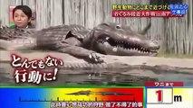 Trolling Crocodiles [Prank Gone Wrong]