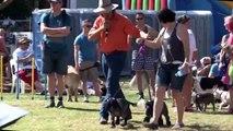 2013 Pride Fair Day Brisbane - Farmer Dave hosting Dog Events