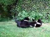 Cats go wild in the garden
