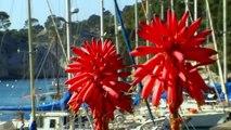 Visite des Calanques de Cassis et Marseille en bateau