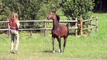 Mit Pferden sein-being with horses- impressions