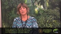 Rainforest Alliance's Tensie Whelan discusses rainforests and climate change