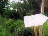 Provence Paysages Méditerranée - Création de jardin - Gazon en plaques - Palmiers - Oliviers
