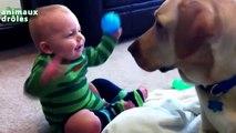 Chiens - chien drole - Chiens drôles Sourire - chien qui aboie - chien qui parle - chien m