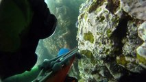Spearfishing Triggerfish at Coranado Islands