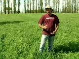 Summer Seeded Hairy Vetch from Vegetable Farmers and their Innovative Cover Cropping Techniques