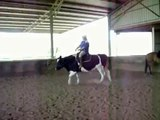 Riding my riding steer Jackson - RISING trot!